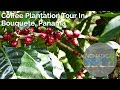 Coffee Plantation Tour in Boquete, Panama