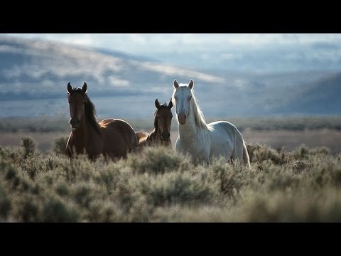 Free Roaming Wild Horses & Mustangs of Nevada - Pioneer Spirit of the West