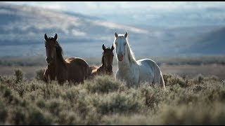 Free Roaming Wild Horses & Mustangs of Nevada - Pioneer Spirit of the West