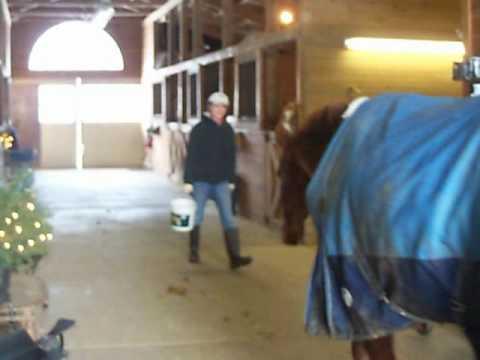 Funny Horse Blooper