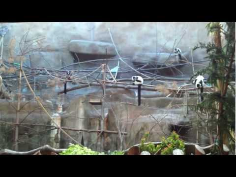 Lemur making sounds at the Detroit Zoo