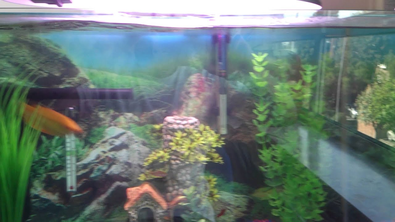 Newly set up tropical fish tank cycling youtube for Cycling a fish tank