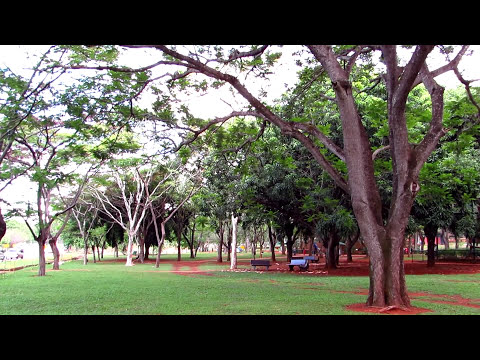 Jardim Zoológico de Brasilia - DF (veja em Full HD)