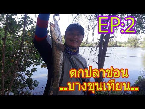ตกปลาช่อน ด้วยเหยื่อปลอม วังกุ้ง บางขุนเทียน EP:2