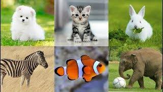 Learn Animals | Animals for Kids | Zoo Animals | Wild Animals | Sea Animals | Farm Animals
