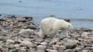 Watch Across Five Aprils I Am The Polar Bear video
