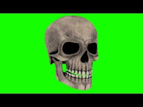 human skull in green screen rotation free stock footage thumbnail