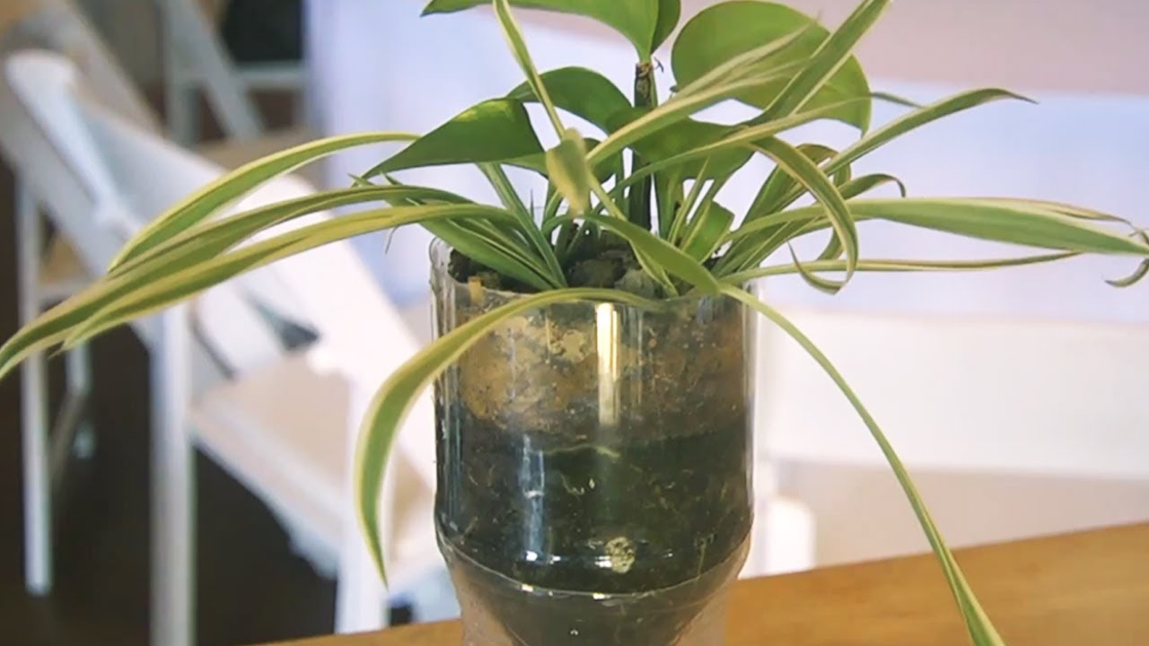 How To Make A Soda Bottle Planter At Bean2blog Event At