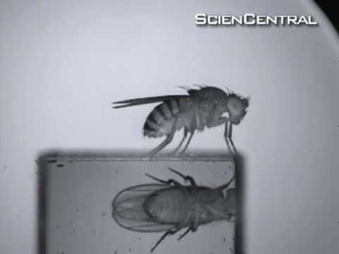 Fly Swat Science