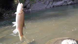 Dere balığı avı