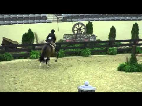 Video of ONASSIS ridden by SARAH WARD from ShowNet!