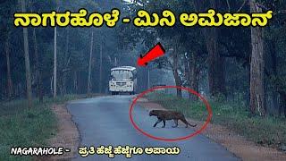 Nagarhole | Nagarhole National Park | ನಾಗರಹೊಳೆ | Nagarhole Tiger Reserve Safari | nagarahole