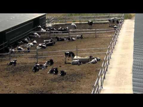 Satılık Büyükbaş Hayvan Çiftliği Eskişehir Hazer Emlak