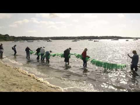 Cape Cod Community College Water Testing & Cape Cod Wetlands