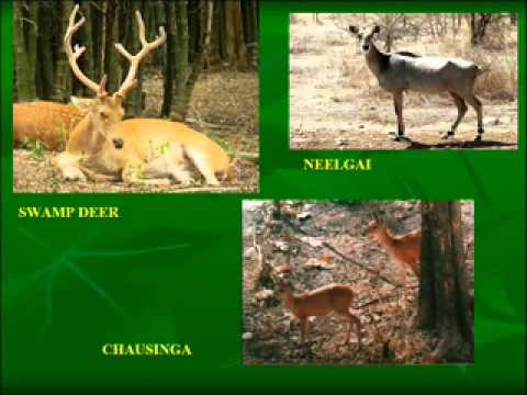 forests and wildlife ppt