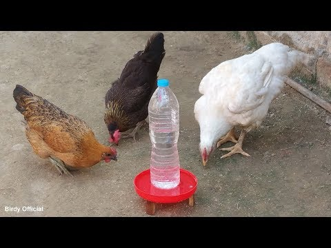 DIY Chicken Water Feeder from Waste Water Bottle | Best Out of Wastes