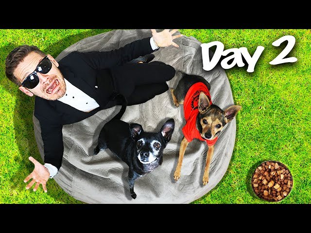 Last to Leave Giant Beanbag Wins $10,000 Challenge! (PawZam Dogs vs. Game Master Incorporated) thumbnail