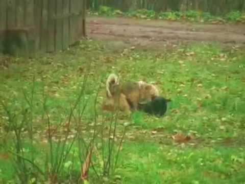 Zoo Sex. - YouTube