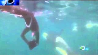 Killer Whales (Orcas) - Nature Documentary HD Part-4 - Shark Attacks 2013 Video