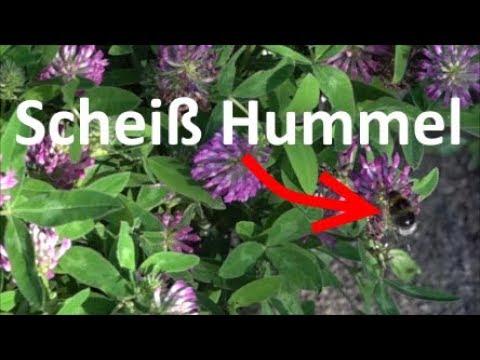 [Wissen] Wie macht (scheißt) eine Hummel? - Insekten - Tiere - 1000FPS - Slow Motion