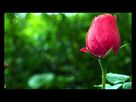 'seerat Hazrat Fatimah Bint Muhammad (r.a)' By Qari Abdul Hafeez Faisalabadi video