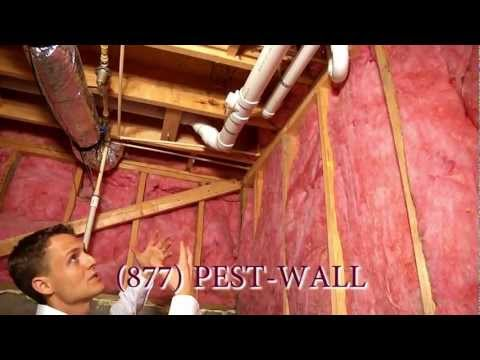 lots of pest problems originate from the basement in