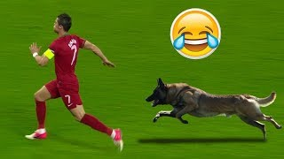 Animals On Field- Funny Football Moments HD