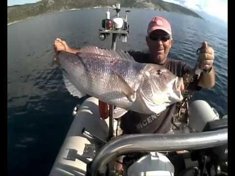dentex  ΣΥΝΑΓΡΙΔΑ ΑΠΙΚΟ-Ν80 sotos fishing.wmv