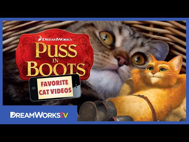 Mommy Cat Hugs Her Baby | PUSS IN BOOTS FAVORITE CAT VIDEOS