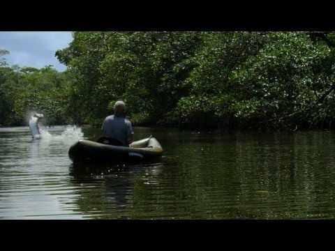 Killer Torpedo - How to Catch a Tarpon | River Monsters