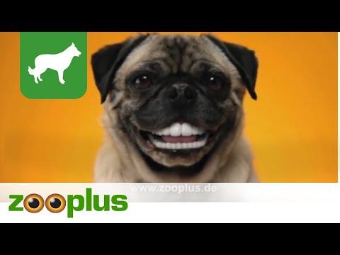 Denta Stix (Pedigree)