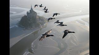 Amazing fligts with birds on board a microlight. Christian Moullec avec ses oiseaux