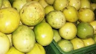 Cultivo de Maracuya Fruta de la Pasión - TvAgro By Juan Gonzalo Angel