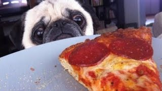 Funny Dogs Stealing Pizza Compilation 2015