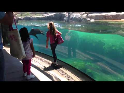 Little Girl And Sea Lion Play Tag. Sea Lion Worried About Little Girl. Original Video video