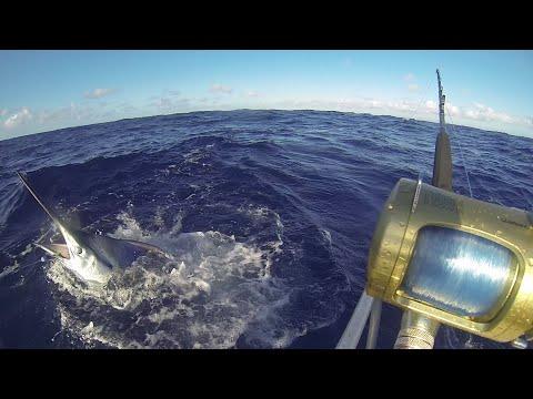 Anglers Code Fishing Team - Solo Black Marlin off Botany Bay Sydney. est. 40kg. Tag & Release!