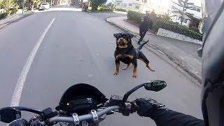 Angry Dogs Vs BIKER