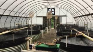 No fish tale: Aquaculture entrepreneur raising 1 million pounds of trout per year