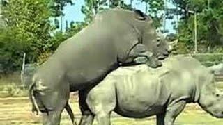 التزاوج عند الحيوانات ناشيونال جيوغرفيك 2016