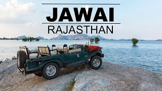 JAWAI I Unseen Wildlife Beauty I Land of Leopard I Rajasthan I India