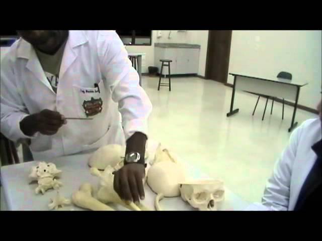 Anatomia - Ossos e Acidentes dos Ossos | Maurício - UNIANDRADE