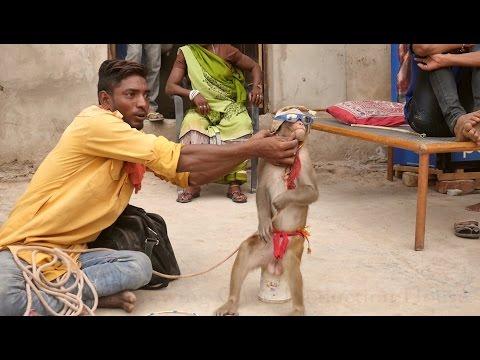 Funny Monkey Dance Video.Comedy Drama in India.Bandar ka khel.कॉमेडी बन्दर का खेल,मदारी.Madari