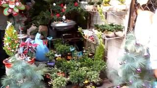 Mercado de plantas madreselva, Nativitas Xochimilco.