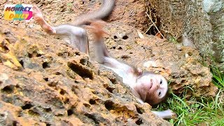 Poor Daniela can't to mom coz see Dolly here | Baby walk fail collapse himself | Monkey Daily 3369
