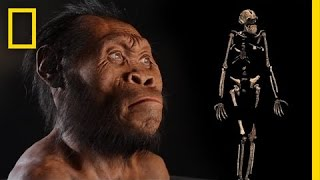 New Human Ancestor Discovered: Homo naledi (EXCLUSIVE VIDEO) | National Geographic