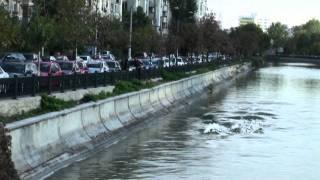 Video incredibil! Delfini maidanezi in Dambovita!! (cu moldoveni)