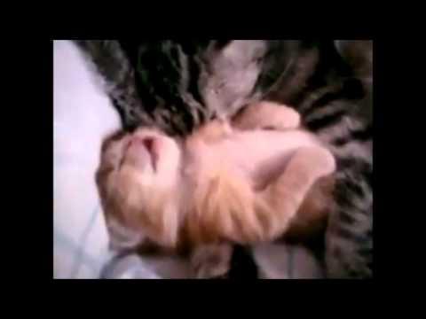 癒し系動物動画集 〜小熊VS小熊・夢を見ている子猫・グーパー猫〜