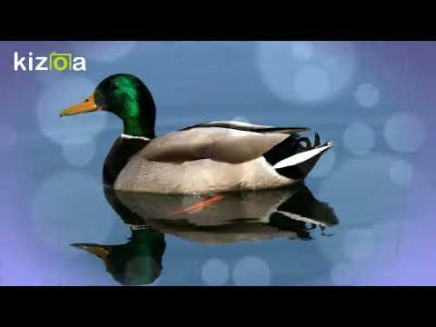 Kizoa Video und Movie Maker: Guten Morgen ...  für einen sanften und entspannten Jahresbeginn