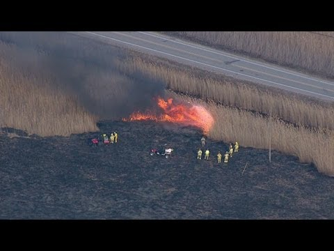 Firefighters battle large grass fire on Harsens Island