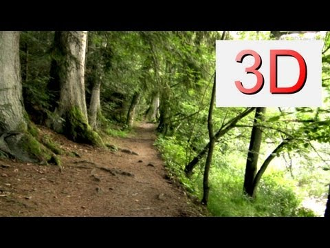 3D Video: WALKING River & Forest #1